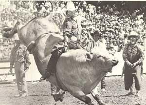 Cosca Livestock Barrel Horses